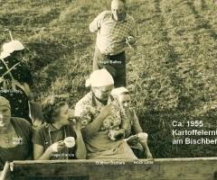 Kartoffelernte am Bischberg um 1955 (1)