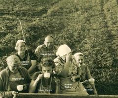 Kartoffelernte am Bischberg um 1955 (2)