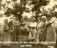 Kartoffelernte 1943