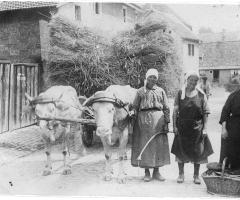Maier Paul Getreidefuhrwerk Aschaffenburger Str 1934