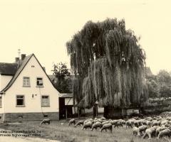 Liebezeitstr 24 Dreschplatz 1954