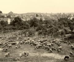Liebezeitstr Dreschplatz 1954 gegenüber